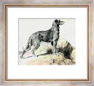Deerhound (Restrike Etching) by Herbert Thomas Dicksee