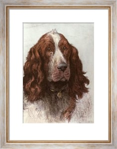 Springer spaniel (Restrike Etching) by Herbert Thomas Dicksee