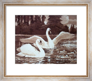 Swans - Plate I (Restrike Etching) by Ward Binks