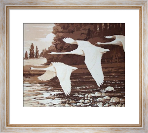 Swans - Plate II (Restrike Etching) by Ward Binks