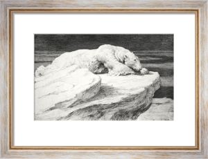 Polar Bear at Rest (Restrike Etching) by Herbert Thomas Dicksee