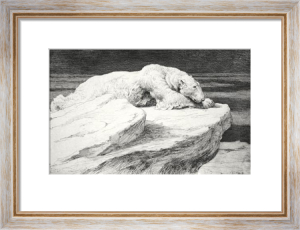 Polar Bear at Rest (Restrike Etching) by Herbert Thomas Dicksee