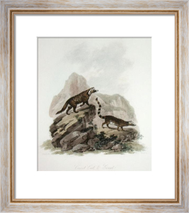 Civet Cat & Genet (Restrike Etching) by Julias Caesar Ibbetson