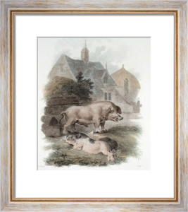 Boar & Chinese Hog (Restrike Etching) by Julias Caesar Ibbetson