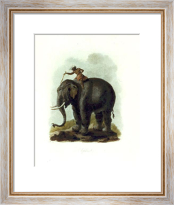 Elephant (Restrike Etching) by Julias Caesar Ibbetson