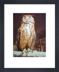 Turkmenian Owl (Restrike Etching) by Alex Mackay