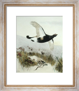 Black Grouse (Restrike Etching) by Anonymous
