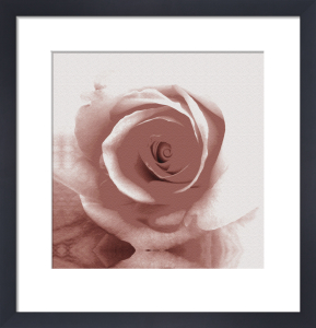 Rose I by Erin Rafferty