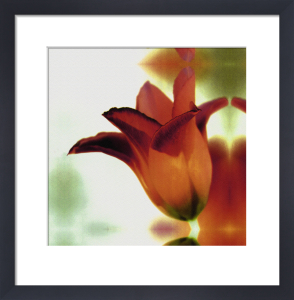 Autumn Tulip by Erin Rafferty