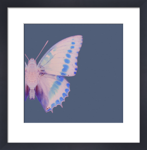 Butterfly 1 by Erin Rafferty