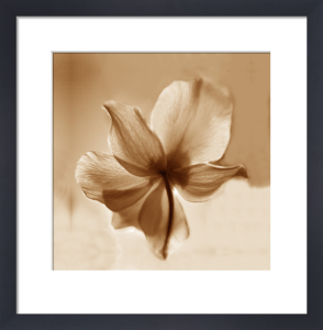 Mocha flora 1 by Erin Rafferty