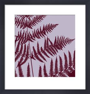 Lilac ferns by Erin Rafferty