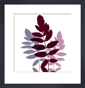 Lilac leaves by Erin Rafferty