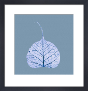 X-Ray leaf 1 by Erin Rafferty