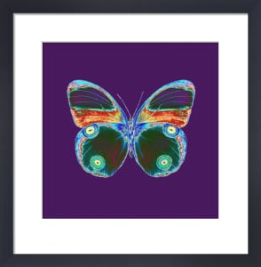 Purple Butterfly by Erin Rafferty