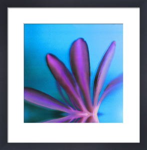 Purple Petals by Erin Rafferty