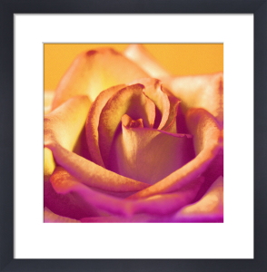 Ochre Rose by Erin Rafferty