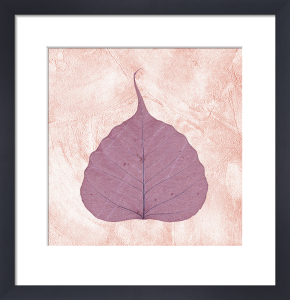 Purple Leaf II by Erin Rafferty