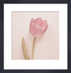 Tulip II by Erin Rafferty
