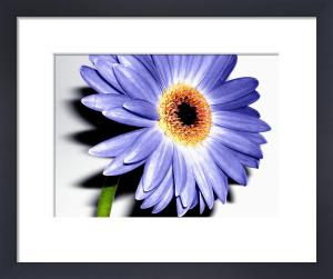 Wild Flower II by Erin Rafferty