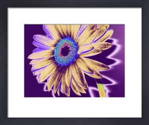 Wild Flower III by Erin Rafferty