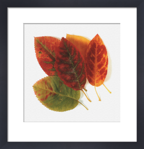 Autumn Leaves by Erin Rafferty