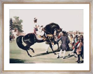 Godolphin Arabian, Scham (Restrike Etching) by William Webb