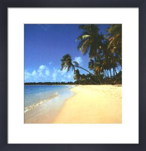 Tropical Dreams by Erin Rafferty