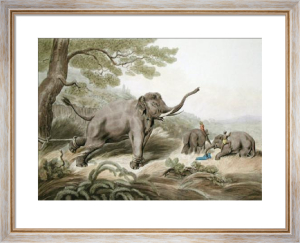 Decoy Elephant Leaving a Male (Restrike Etching) by Samuel Howitt