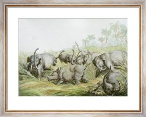 Rhinoceros Hunted by Elephants (Restrike Etching) by Samuel Howitt