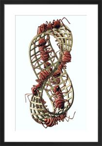 Mobius Strip II by M.C. Escher