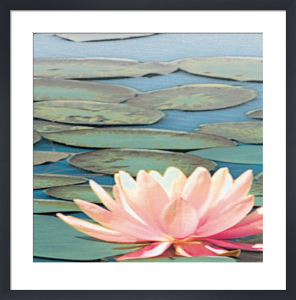 Lily Pool IV by Adam Brock