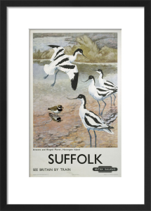 Suffolk - Avocets and Ringed Plover by National Railway Museum