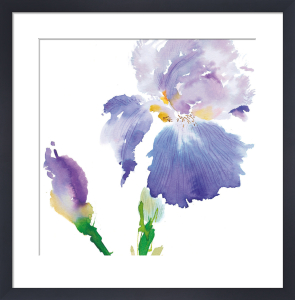Iris by Summer Thornton