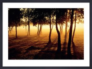 Mist & Sunlight by Jan Tove