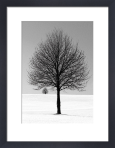 Winter Tree by Ilona Wellmann