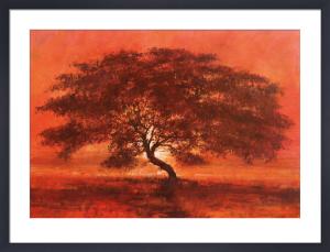 Desert Tree by Jonathan Sanders