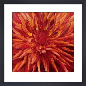 Fabulous Orange Dahlia by Sarah Caswell