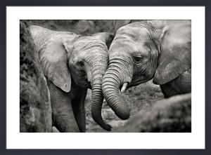 Elephants in Love by Marina Cano
