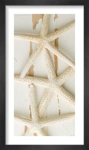 White Starfish on Wood by Deborah Schenck