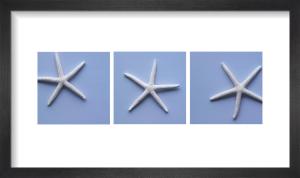 Hope Starfish by Deborah Schenck