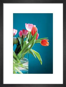 Tulips by Scott Dunwoodie