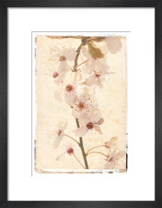 Vintage Blossom by Deborah Schenck