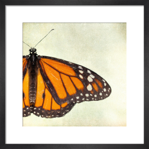 Monarch by Robert Cadloff