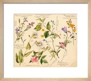 Wild flowers composite by Lillian Snelling