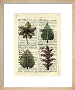 Set of 4 Leaves by Marion McConaghie