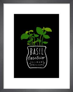 Basil by Ana Zaja Petrak
