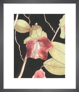 Cobaea scandens by Rosie Scott