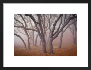 Pilot Road Trees by David Lorenz Winston