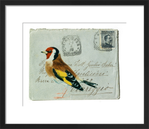 Goldfinch by Deborah Schenck